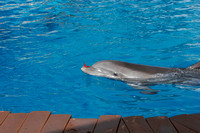 dolphins_9828