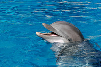 dolphins_9832