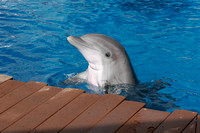 dolphins_9839