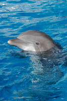 dolphins_9842