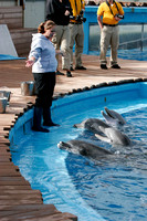 dolphins_9851
