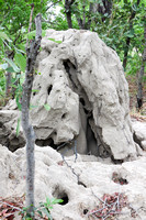 Eroded termite mound, home of many critters