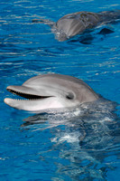 dolphins_9836